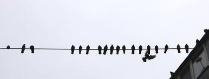 几只鸟在绳索的城市 库存照片