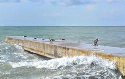 几只鸥坐一个码头在轻的海猛冲 库存图片
