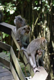 几只猴子在公园 图库摄影
