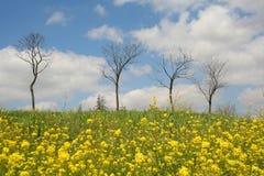 几天早期的春天 免版税库存照片