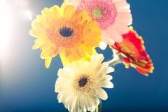 几朵大丁草雏菊,反对光,蓝色背景 免版税库存图片