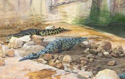 几条鳄鱼在鸟舍 免版税库存图片