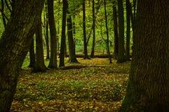 几棵树在秋天森林里 库存图片