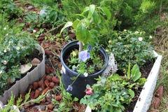 几盆的植物a 免版税库存图片