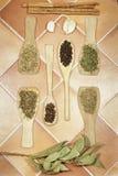 几颗种类、草本和种子芳香香料  垂直的视图 图库摄影