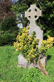 凯尔特十字架和一棵小树 库存图片
