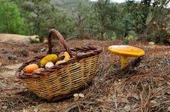 凯撒蘑菇s 免版税库存照片