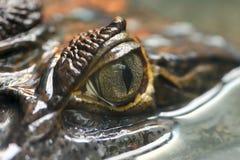 凯门鳄crocodilus 5 免版税库存照片