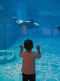 凶手增长下来鲸鱼奇迹 库存照片