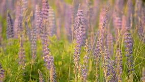 凶猛野生草甸植物 免版税库存图片