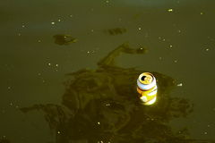 凸轮污染水 免版税库存图片
