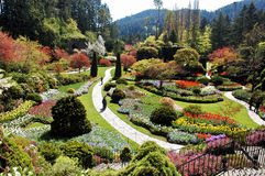 凹下去加拿大的庭院 库存图片