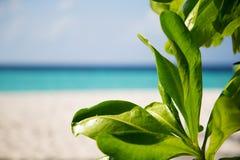 出于对海滩考虑的框架 图库摄影