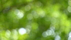 出于焦点慢动作移动绿色叶子 股票视频