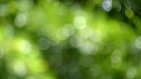 出于焦点慢动作移动绿色叶子 影视素材