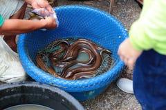 出售和烹调的淡水鳗鱼 库存图片