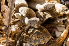 出售的爬行动物 免版税库存图片