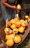出售结构树妇女的椰子果子 库存照片