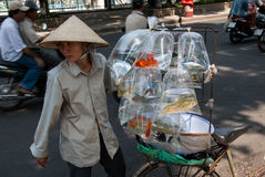 出售金鱼在越南 库存图片