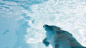 从水出来的滑稽的海豚 股票录像