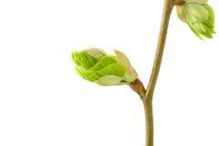 出生寿命新的春天 免版税库存照片