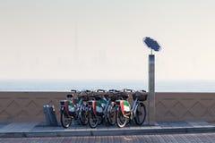 出租自行车在迪拜 免版税库存图片