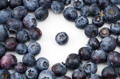 出色的蓝莓 库存图片