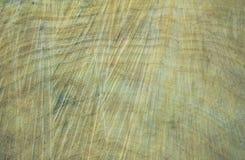 击倒的树干 杨柳,关闭 粗砺木背景的木头 免版税图库摄影