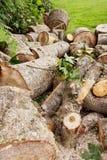 击倒的树干 免版税库存图片