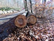 击倒的树轮胎  秋天晴天在森林里 库存图片