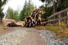 击倒的结构树临近山路 库存照片
