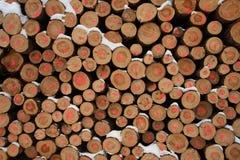 击倒的结构树冬天 库存图片