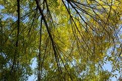 击穿叶子的秋天太阳 库存照片