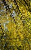 击穿叶子的秋天太阳 免版税库存照片