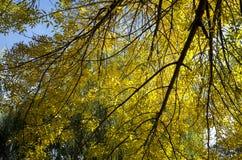 击穿叶子的秋天太阳 免版税图库摄影