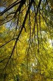 击穿叶子的秋天太阳 库存图片
