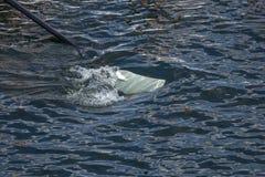 刀片在水中 免版税图库摄影