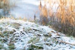 冻刀片草覆盖与在冻湖边缘的小雪  免版税库存图片