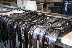 黑刀鞘鱼在鱼市、梅尔卡多dos Lavradores或工作者的市场上 免版税库存照片