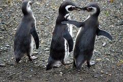 分享食物的企鹅 库存照片