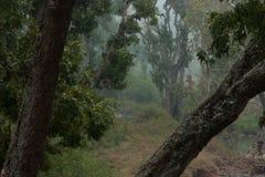 分叉的结构树 库存照片