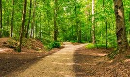 分叉的路在绿色森林里 免版税库存图片