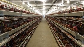 分层堆积农厂住房、蛋孵卵站或者鸡鸡蛋 免版税图库摄影