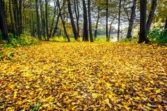 分开与秋天 好的视图 免版税库存照片