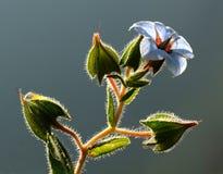 分支与叶子和美丽的春天花 库存照片
