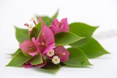 分支与在白色背景和花隔绝的叶子 在白色背景隔绝的花束 免版税库存照片