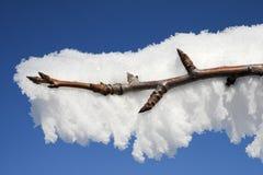 分支与在霜盖的芽在阳光下 库存照片