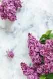 分支与绿色叶子的紫色丁香 库存照片