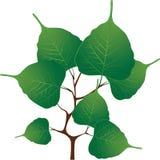 分支与绿色叶子,向量例证 库存照片