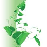 分支与绿色叶子,向量装饰 库存照片